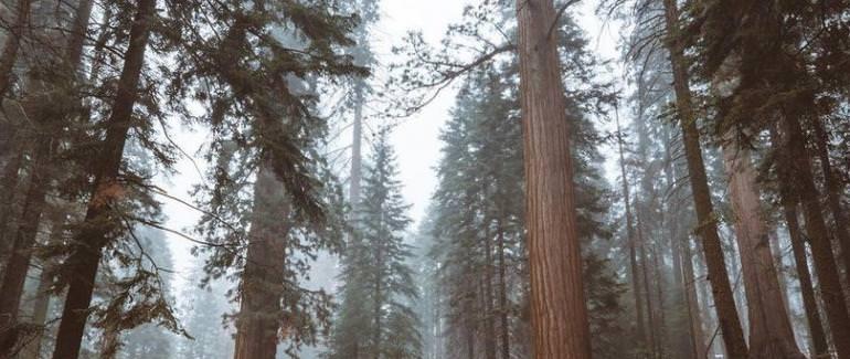 Национальные парки Секвойя, США